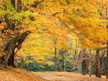 autumn_45.jpg